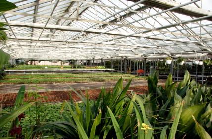 Bromeliad Nursery
