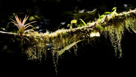 Epiphyte on a tree limb